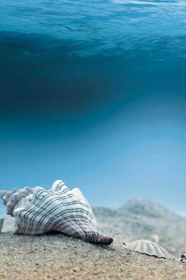 Underwater Ocean Wallpaper Iphone 640x960 Wallpaper Teahub Io