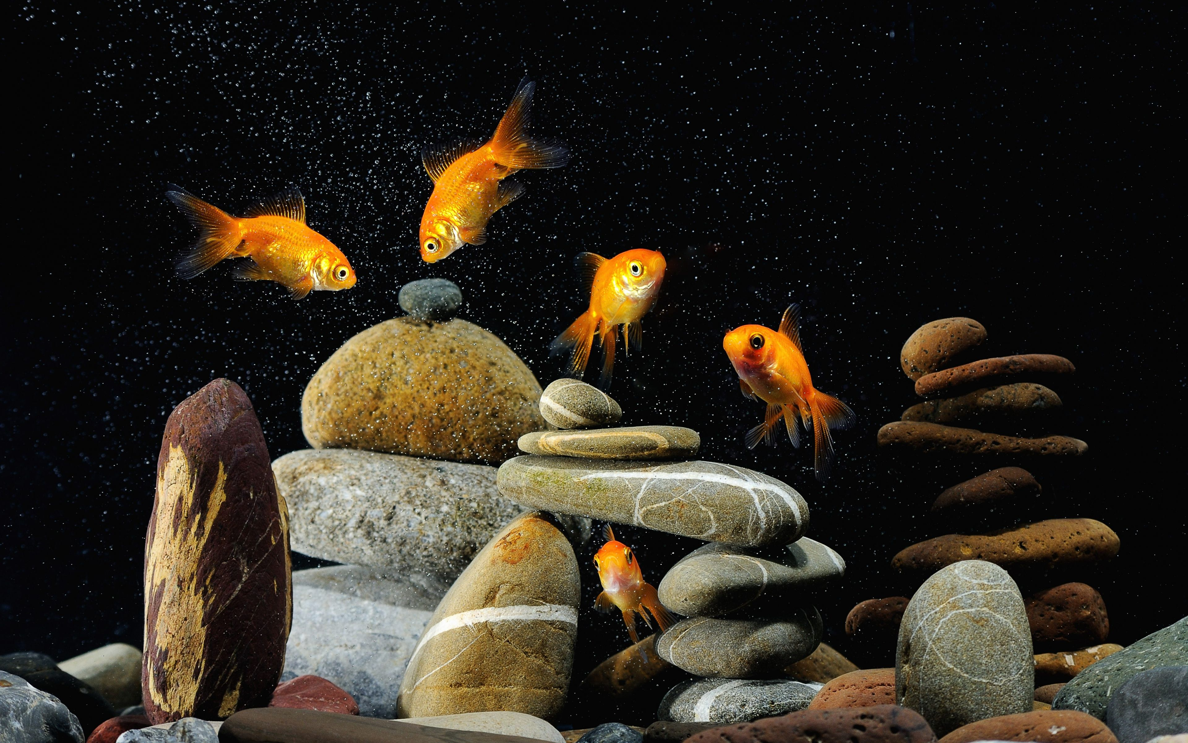 Download Free Aquarium Wallpapers Aquarium Wallpaper For Desktop 3840x2400 Wallpaper Teahub Io
