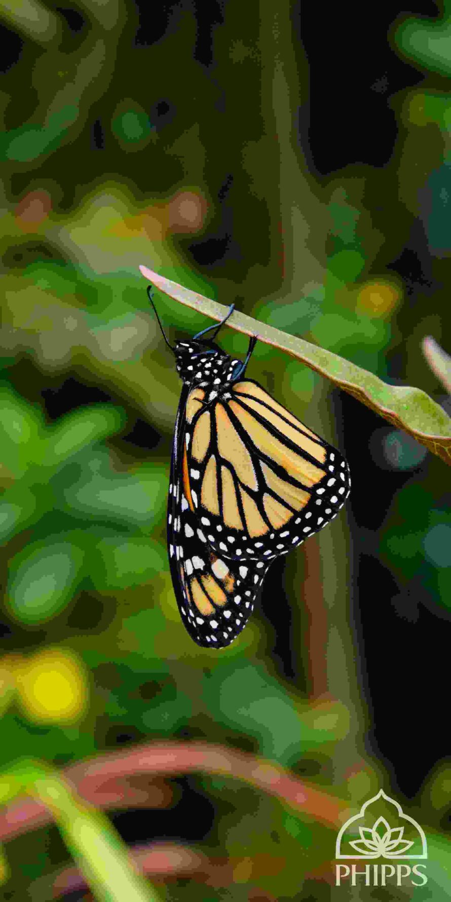 Beach Nature Beauty Fabulous Mobile Wallpapers Hd Wallpapers Monarch Butterfly 890x1780 Wallpaper Teahub Io