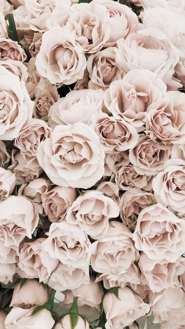 198 1987472 flowers rose and pink image aesthetic wallpaper flowers