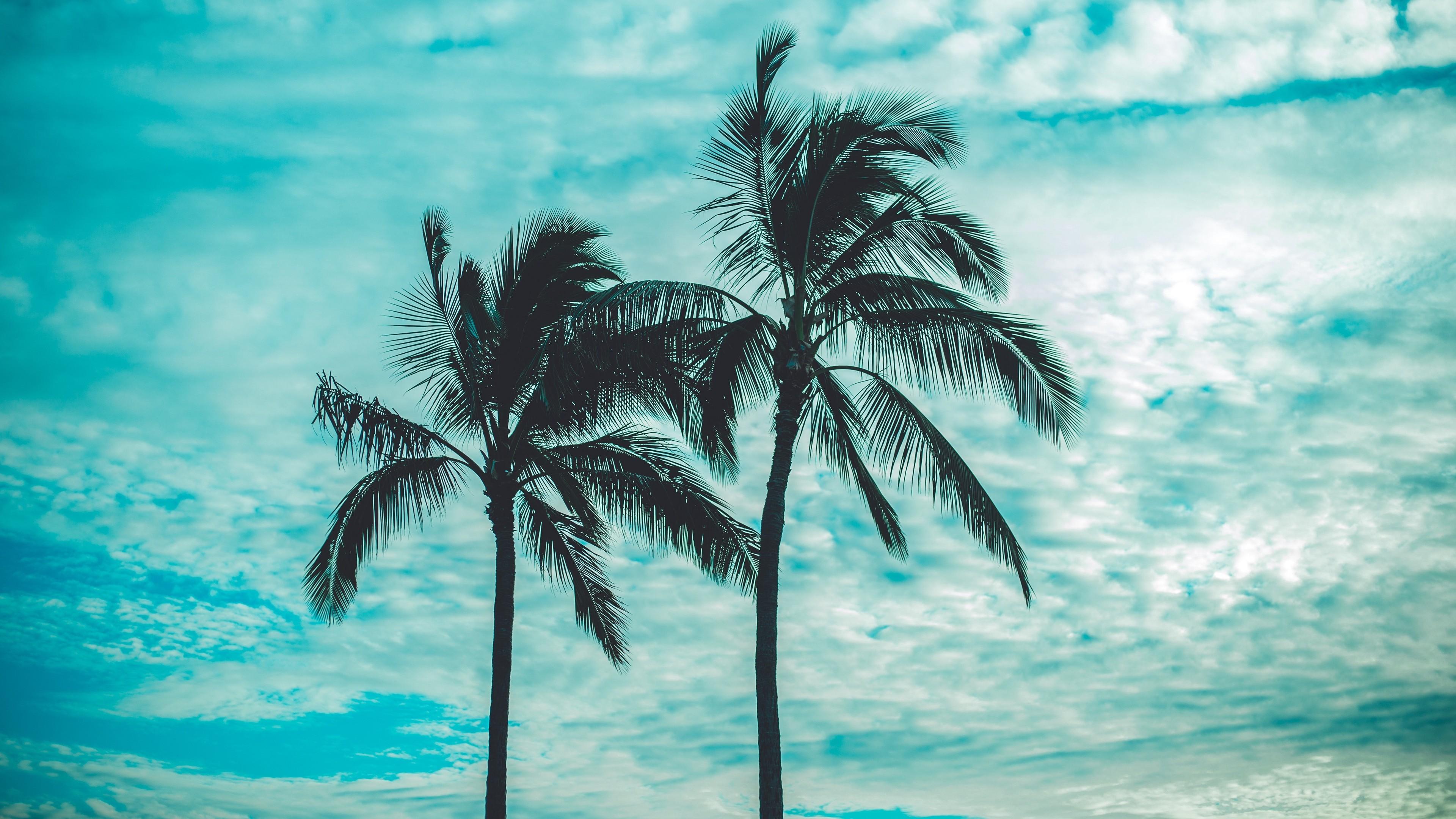 Palm Trees 4k - HD Wallpaper