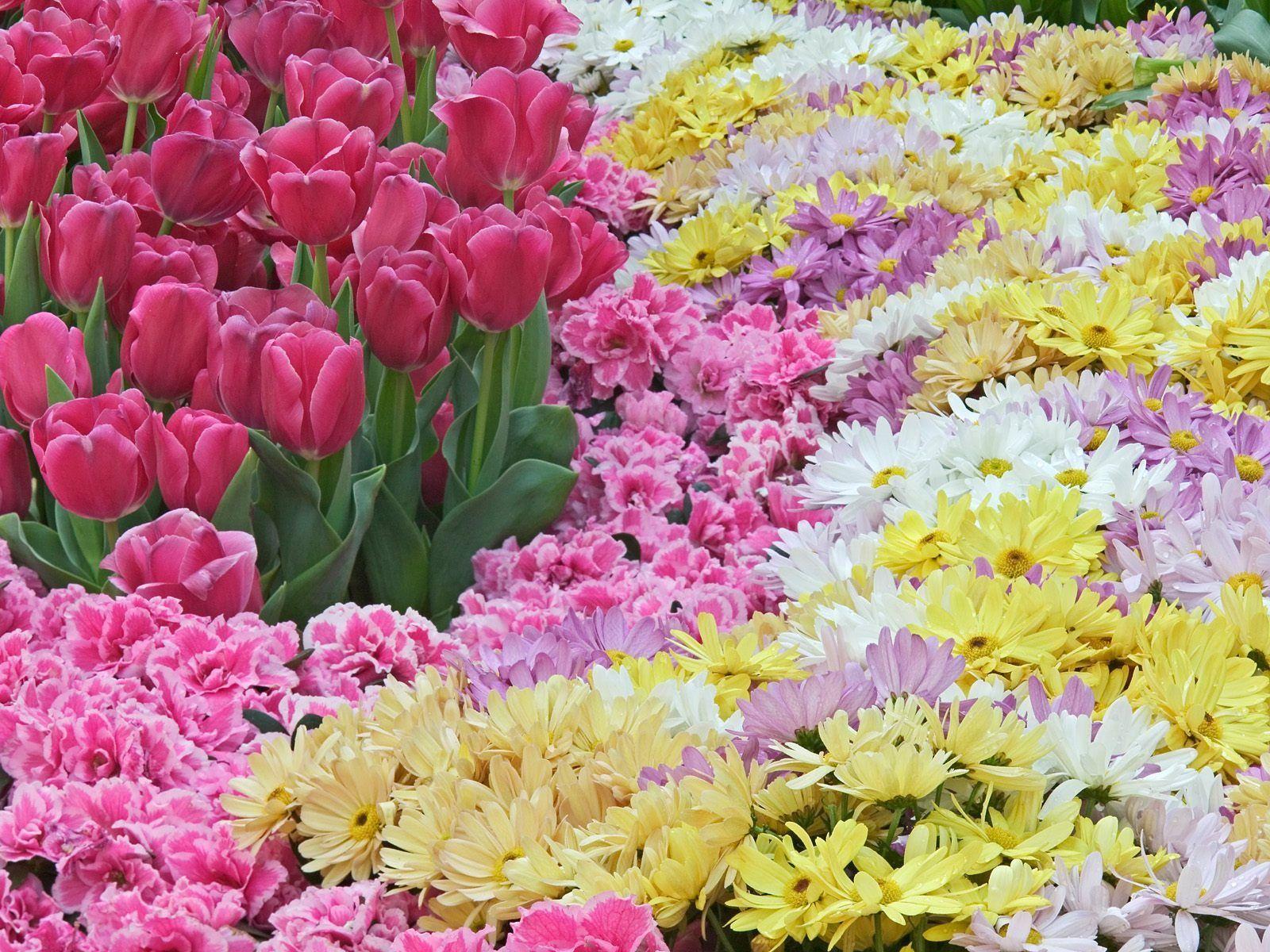 Natural Pastels Wallpaper Flowers Nature Wallpapers - Natural Flower Wallpaper Free Download - HD Wallpaper