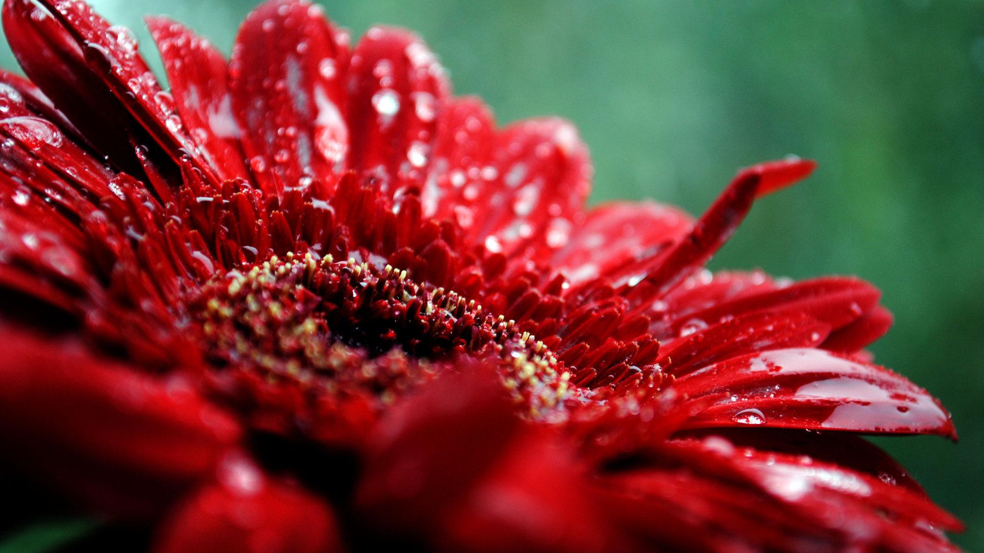 Hd Wallpapers Nature Flowers-13 - Nature Flower Desktop Wallpaper Hd - HD Wallpaper