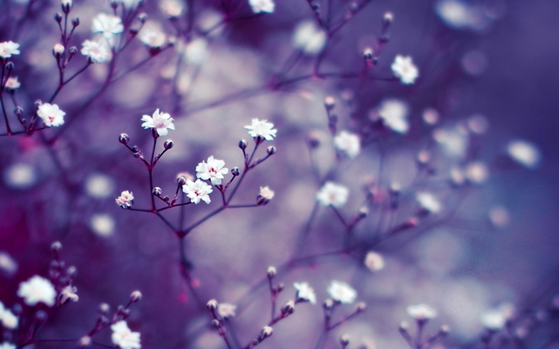 Flower Wallpaper For Macbook Air 2560x1600 Wallpaper Teahub Io