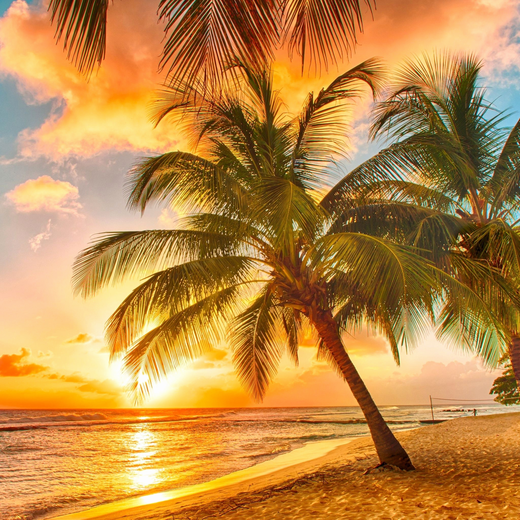 2048x2048, Palm Tree Wallpaper Awesome Palm Trees Beach - Tropical Beach Sunset Hd - HD Wallpaper