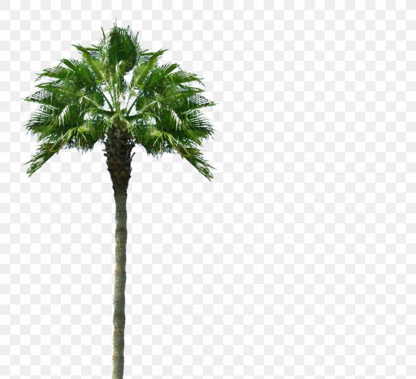 Arecaceae Tree Desktop Wallpaper Information, Png, - Tgif Palm Trees - HD Wallpaper