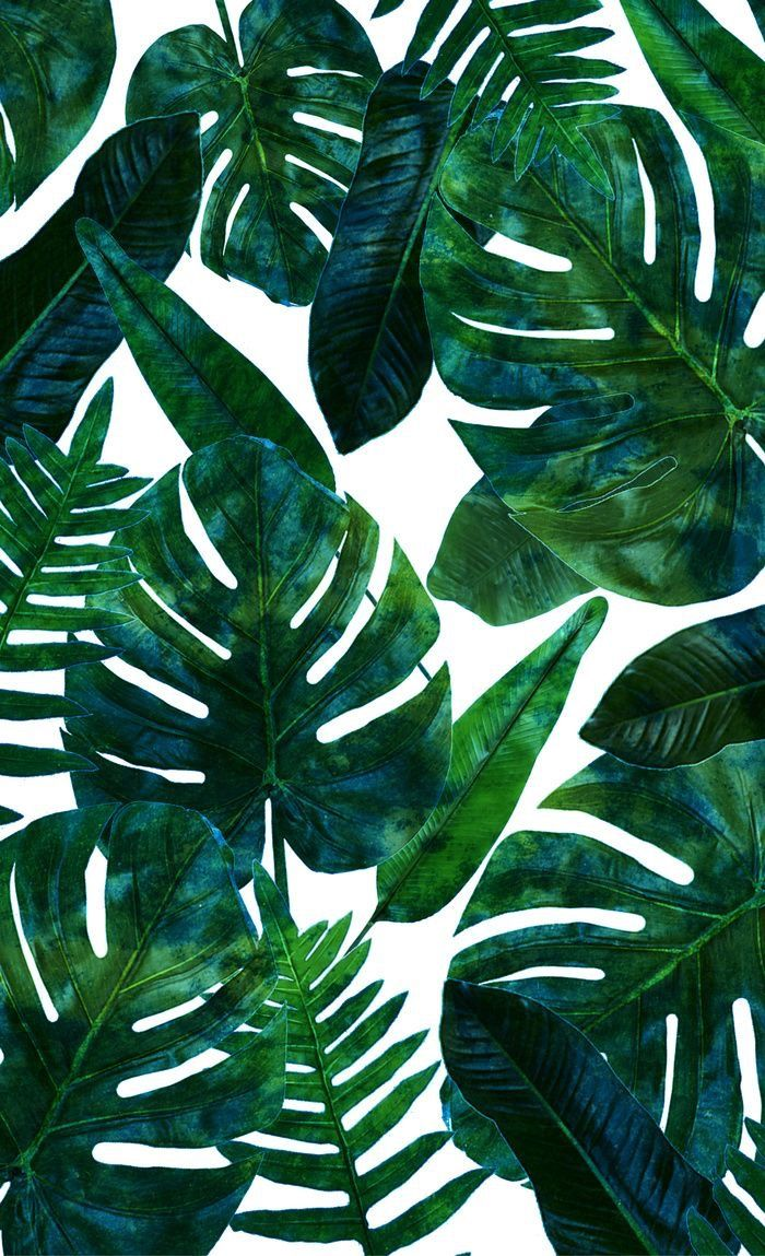 Tropical Leaves Wallpaper Tropical Leaves Wallpaper Hd 700x1149 Wallpaper Teahub Io Download premium png of hand drawn tropical leaves png transparent background by manotang about leaf, leave, botanical, plant and tropical 594525. tropical leaves wallpaper hd
