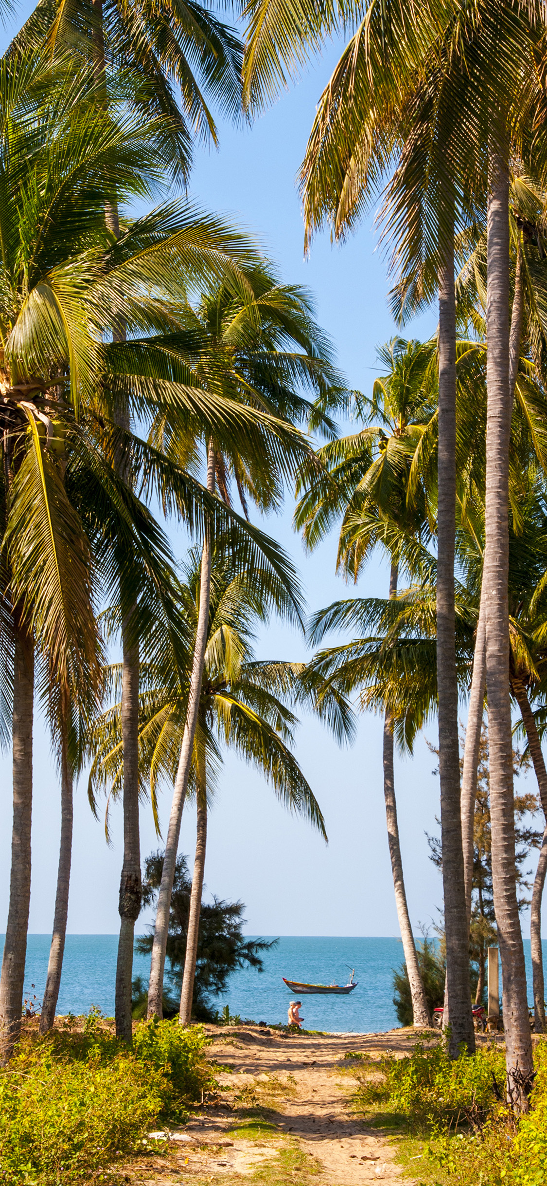 Iphone X Wallpapers Palm Trees - HD Wallpaper