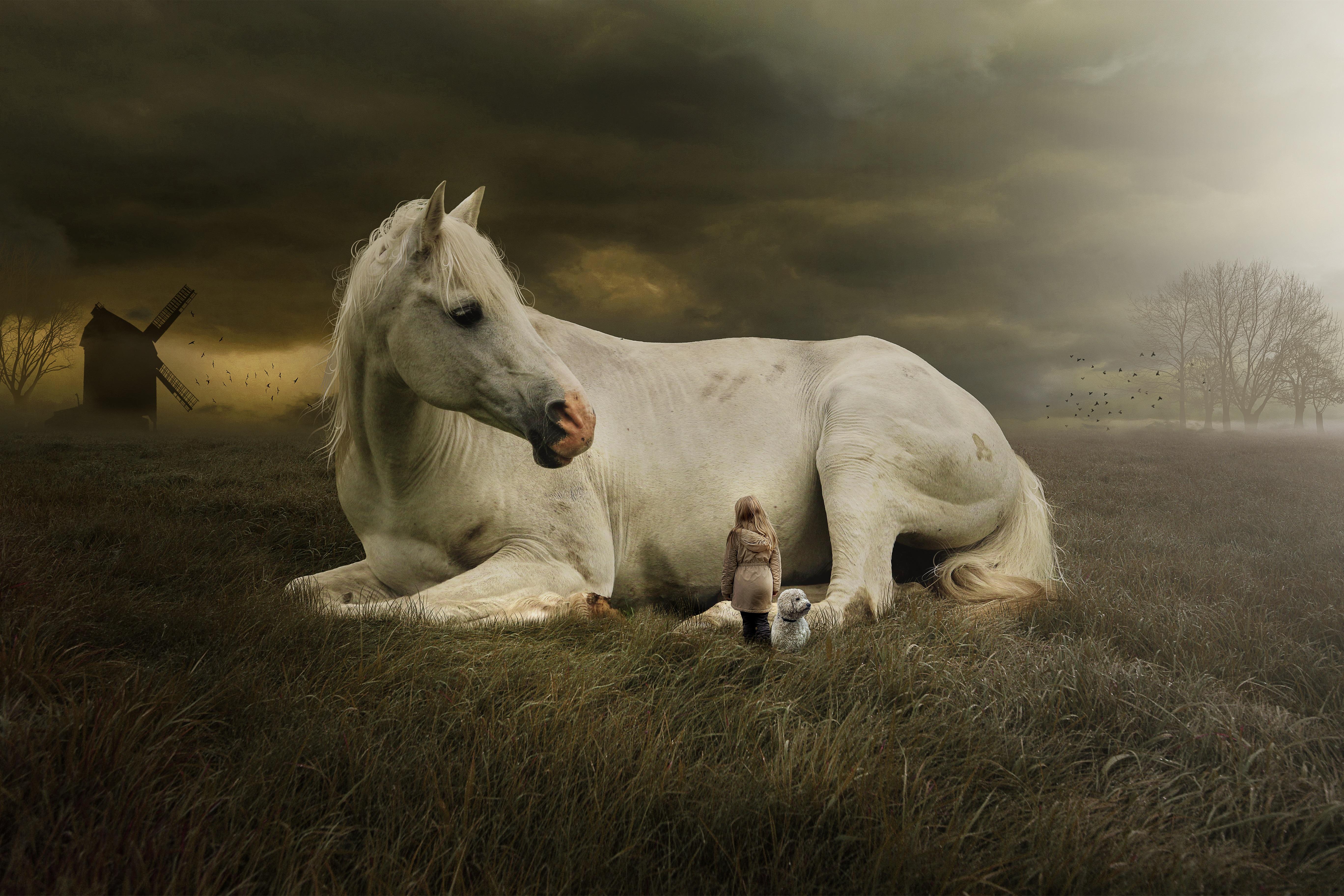 White Horse Laying Down 5472x3648 Wallpaper Teahub Io