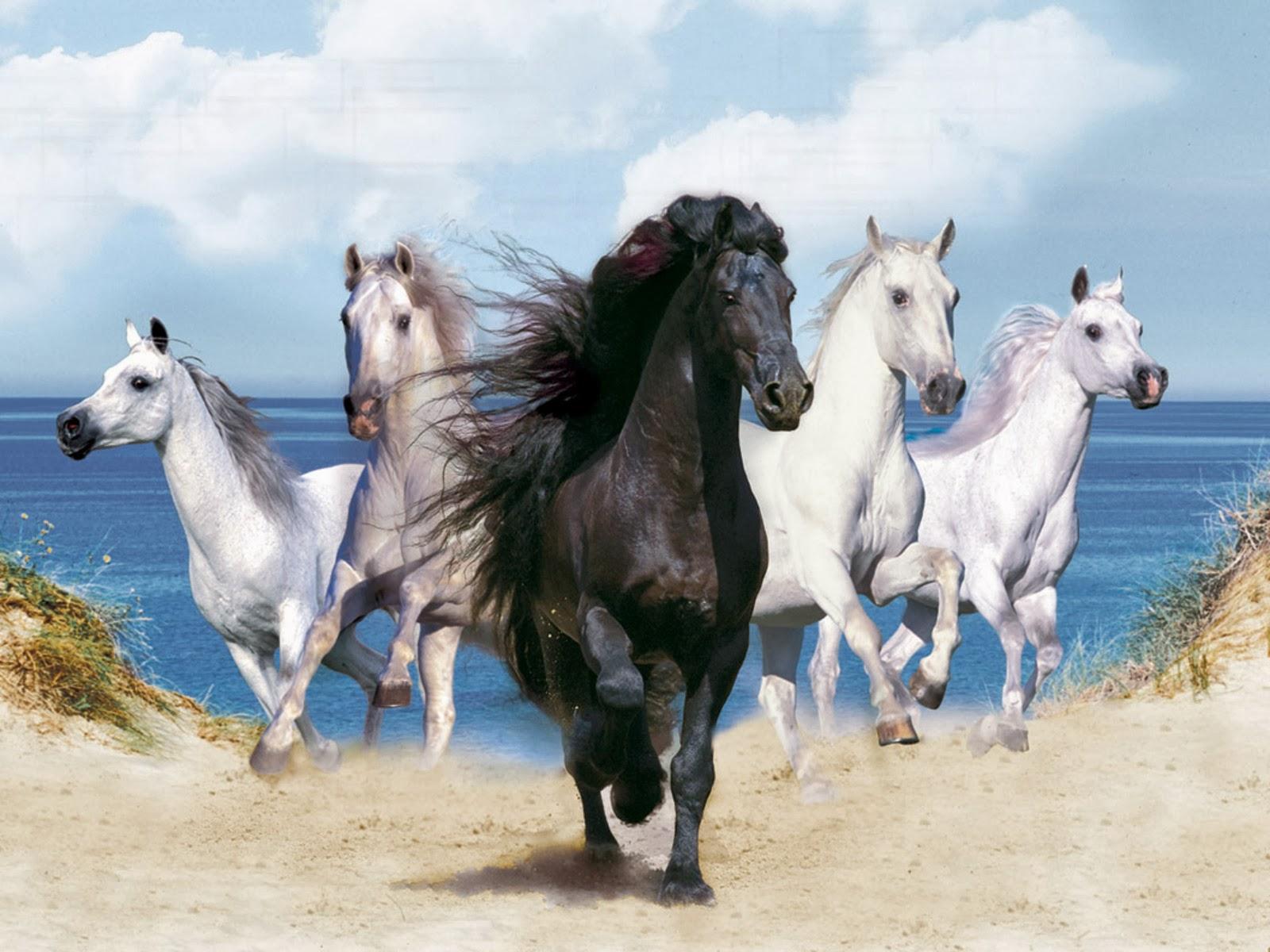 Running Horses Horse Hd Beautiful Cool Wallpaper White And Black Horses 1600x1200 Wallpaper Teahub Io