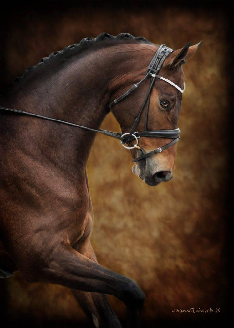 Horse Photography 748x1048 Wallpaper Teahub Io