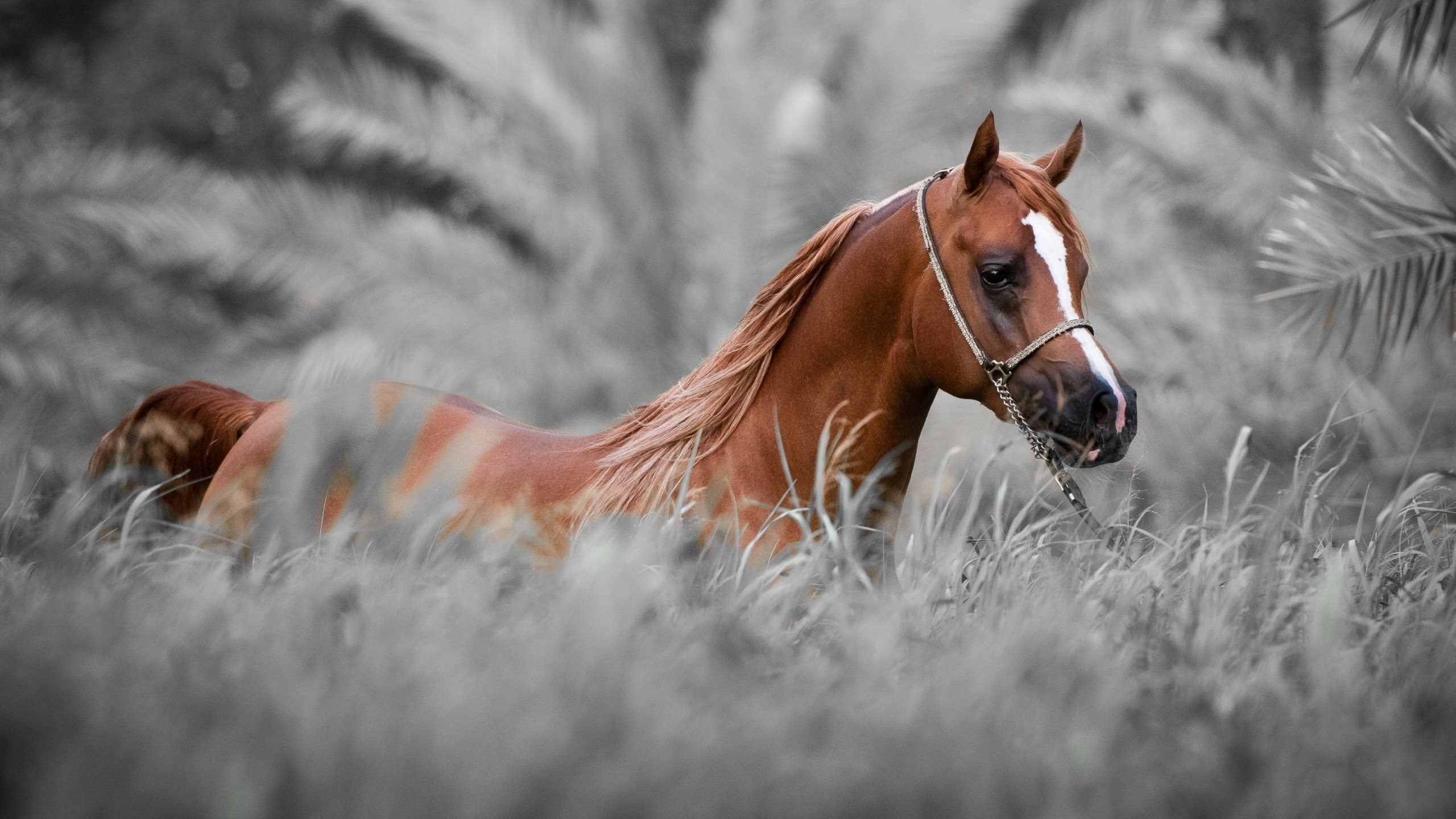 Horse Wallpapers For Android Horse Wallpaper Hd 2560x1440 Wallpaper Teahub Io
