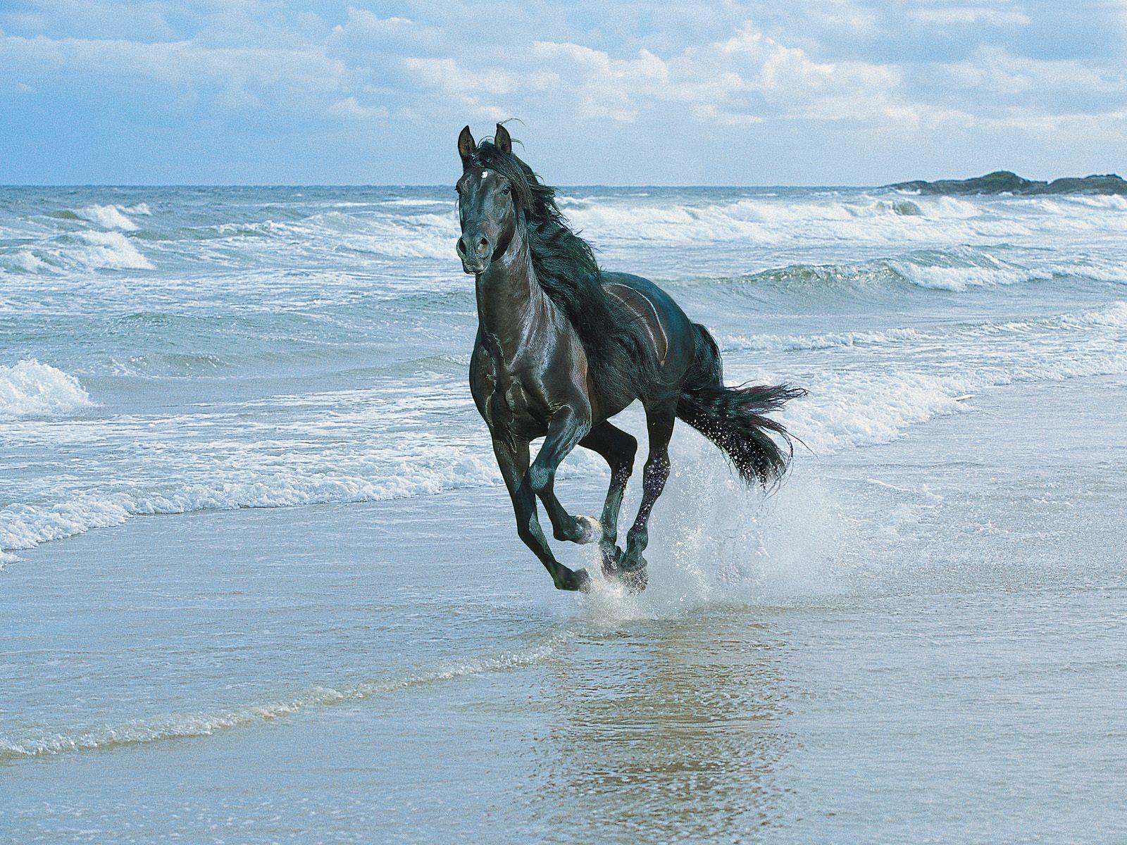Amazing Black Horse Wallpaper Running Black Horse Hd 1600x1200 Wallpaper Teahub Io