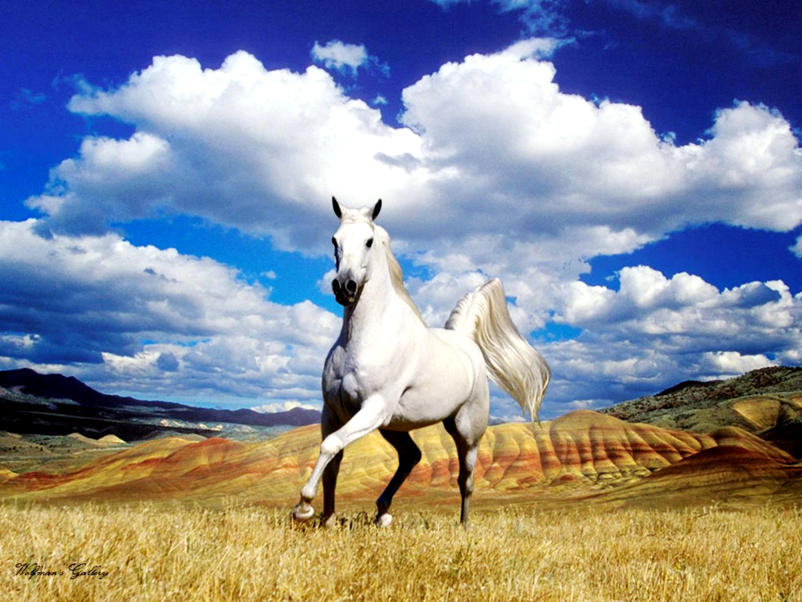 Beautiful Horse Wallpaper 1600x1200 Wallpaper Teahub Io