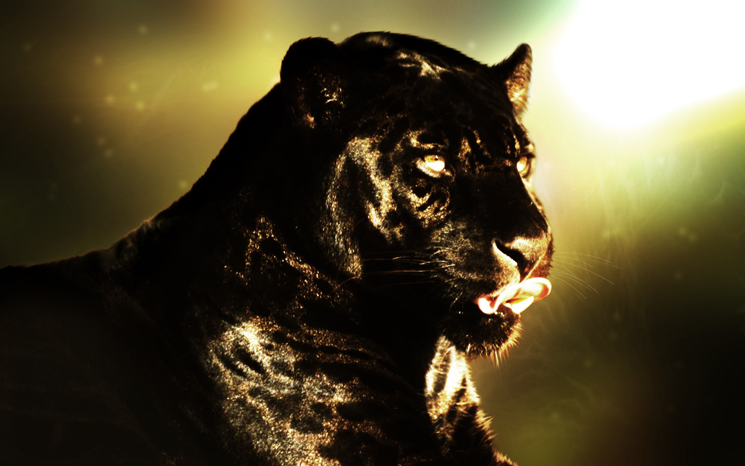 Panther Black Panther Animal Free 2560x1600 Wallpaper Teahub Io