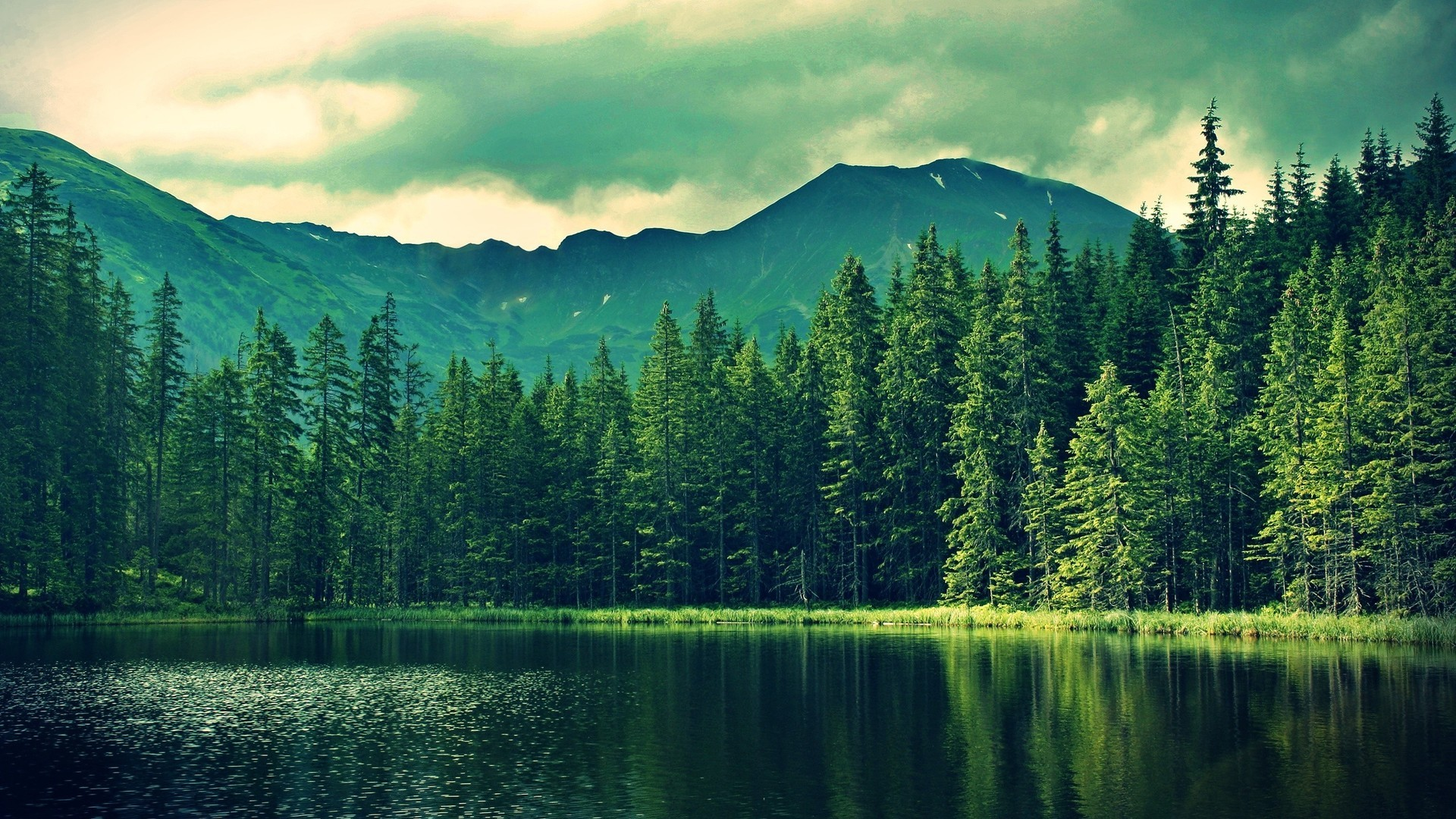 Wallpapers Hd Forest Hd Desktop Wallpapers Amazing - Desktop Wallpaper Forest - HD Wallpaper
