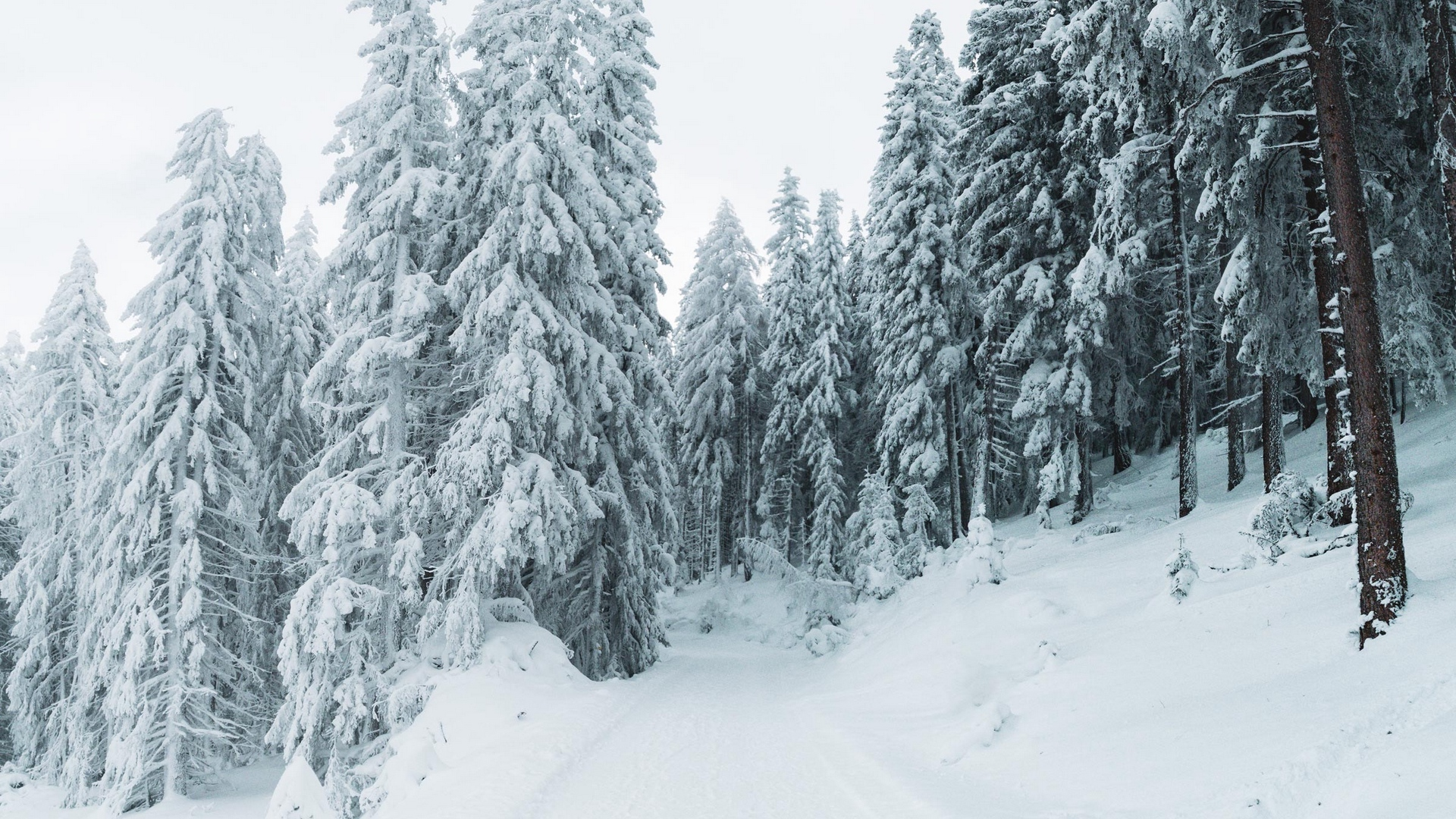 Wallpaper Winter, Snow, Trees, Path, Snowy - Iphone Snowy Trees Background - HD Wallpaper