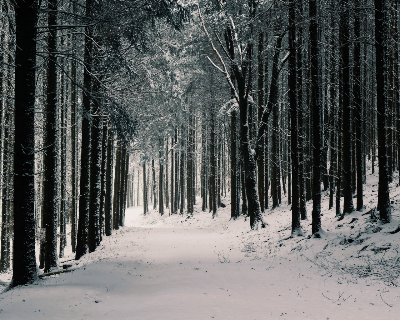 Winter, Forest, Snow, Path, Trees - Iphone Winter Backgrounds Pine Trees - HD Wallpaper