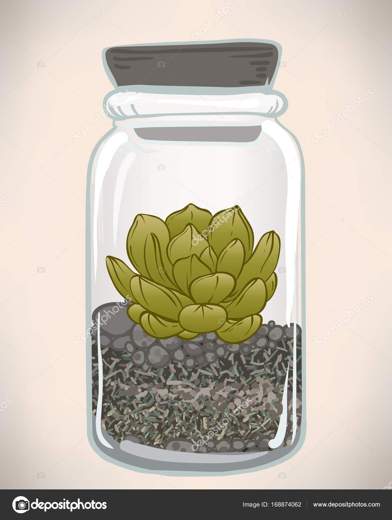 Cute Succulent Terrarium Drawing 1280x1700 Wallpaper Teahub Io