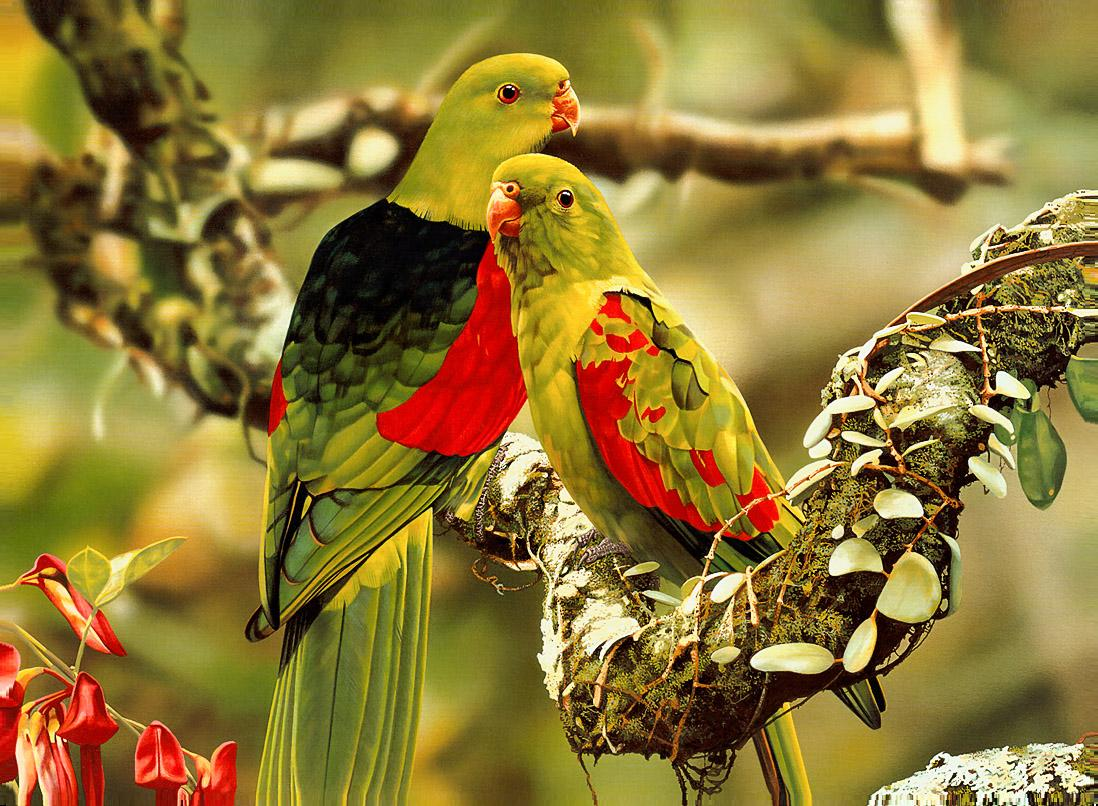 Colorful Parrots Photo - Beautiful Animals Photos Gallery - HD Wallpaper