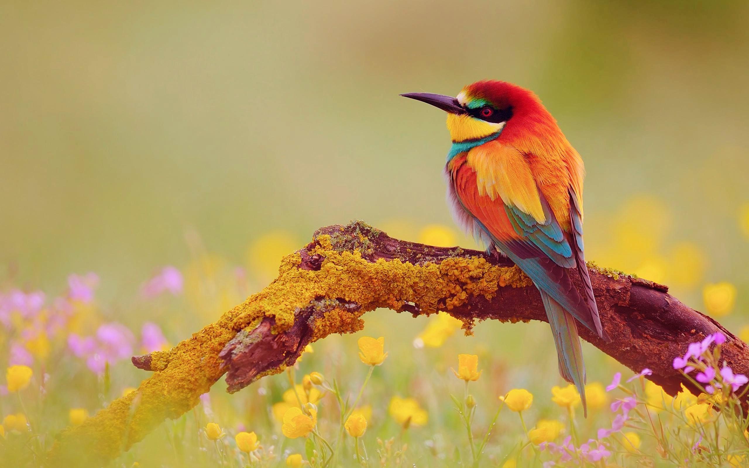 2560x1600 Cute Bird Wallpapers Cute Wallpaper Birds 2560x1600 Wallpaper Teahub Io