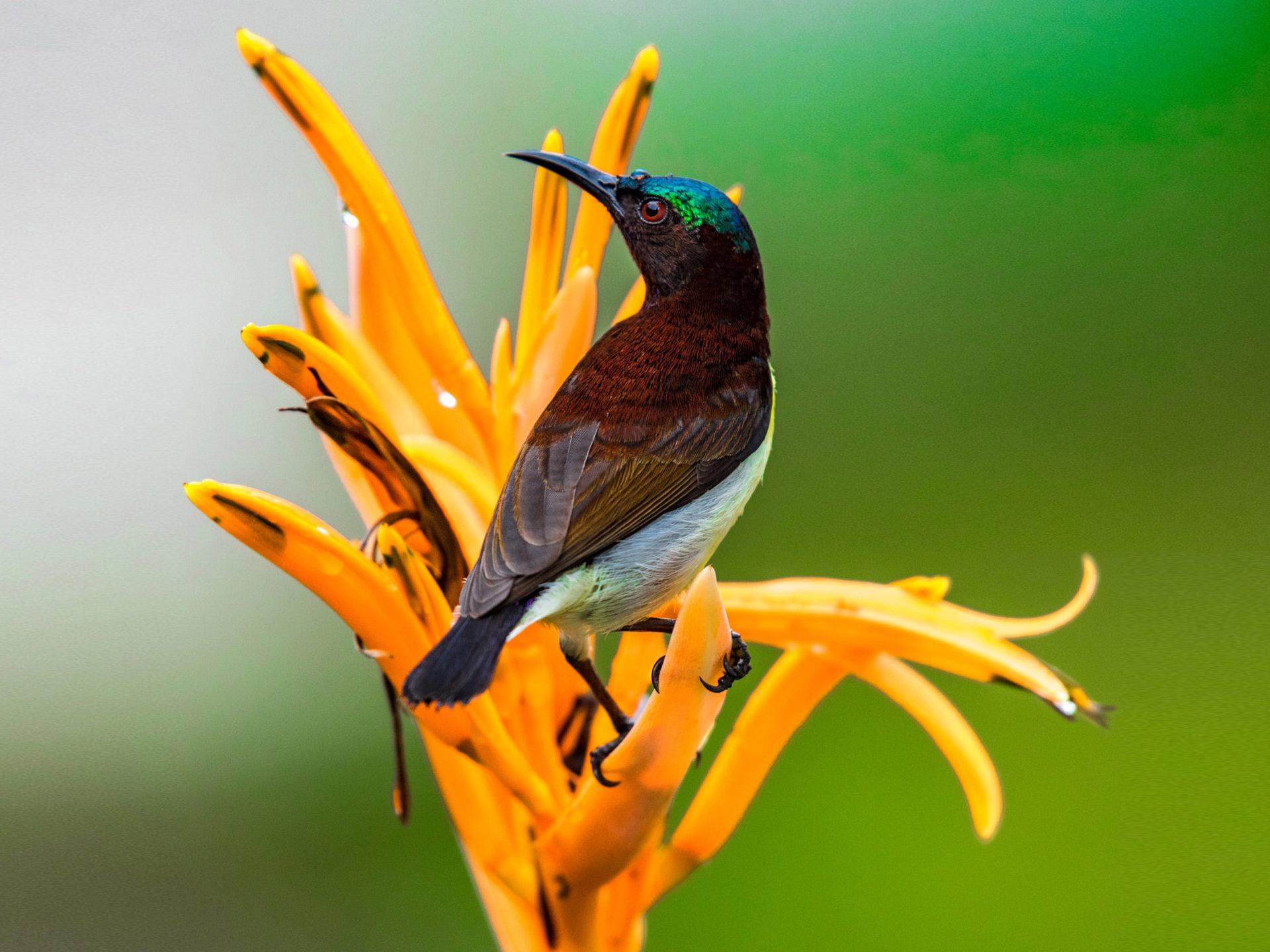 Indian Small Birds Name 1920x1440 Wallpaper Teahub Io