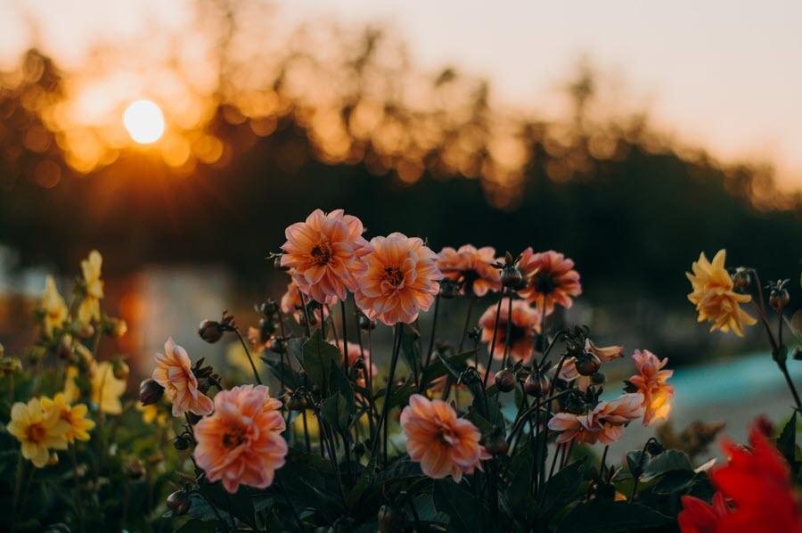 Aesthetic Flower Background Landscape - HD Wallpaper
