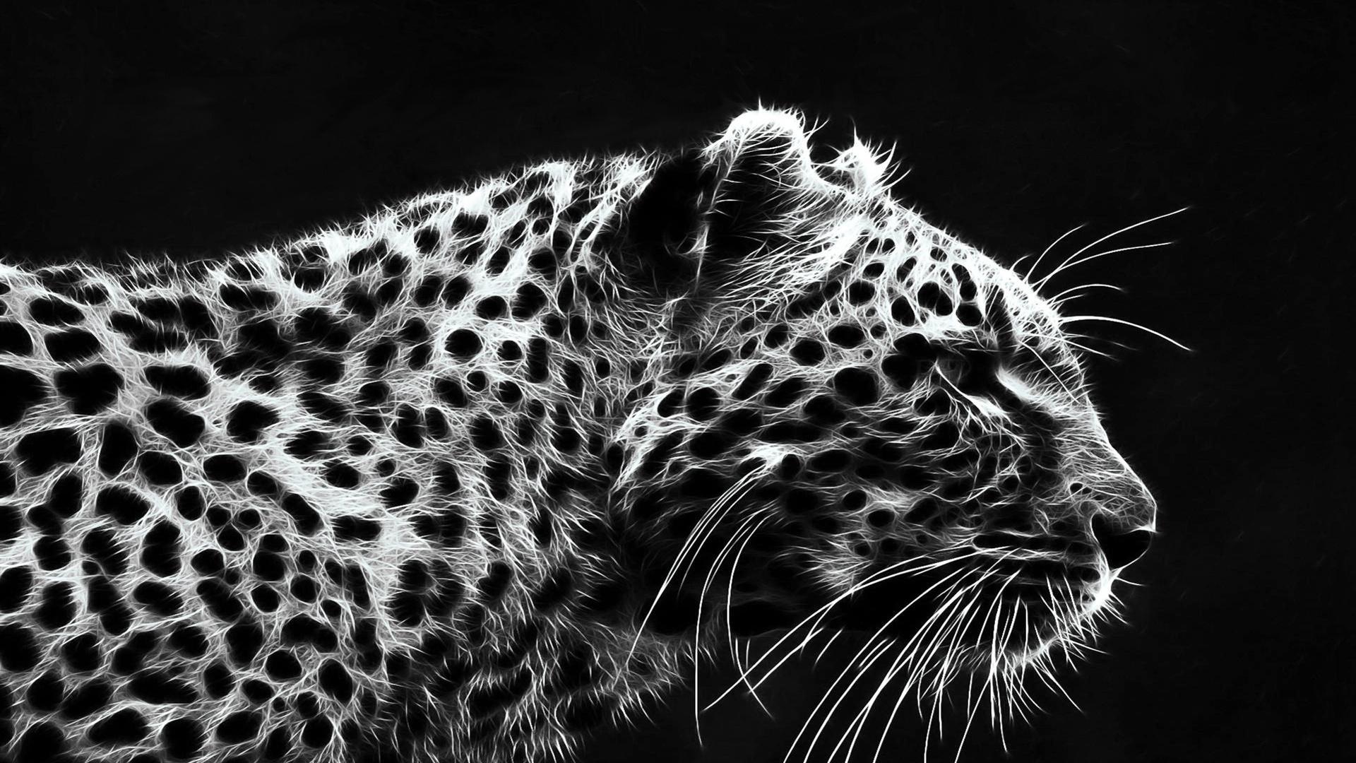 Jaguar Animal Wallpaper Download Data Src W Full 2 4 3 193885 Black Leopard Wallpaper Hd 1920x1080 Wallpaper Teahub Io