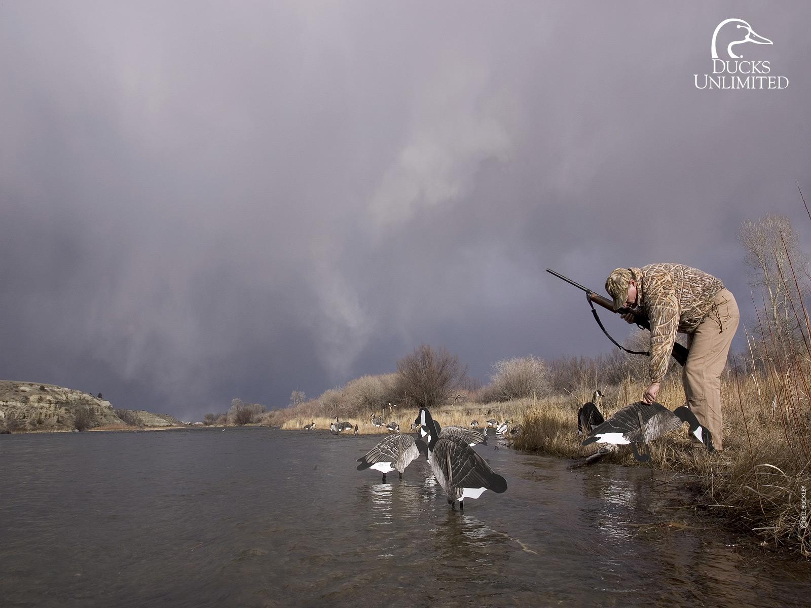 Drake Waterfowl Wallpaper Hd Wallpapers Opengavel  - Ducks Unlimited Backgrounds - HD Wallpaper