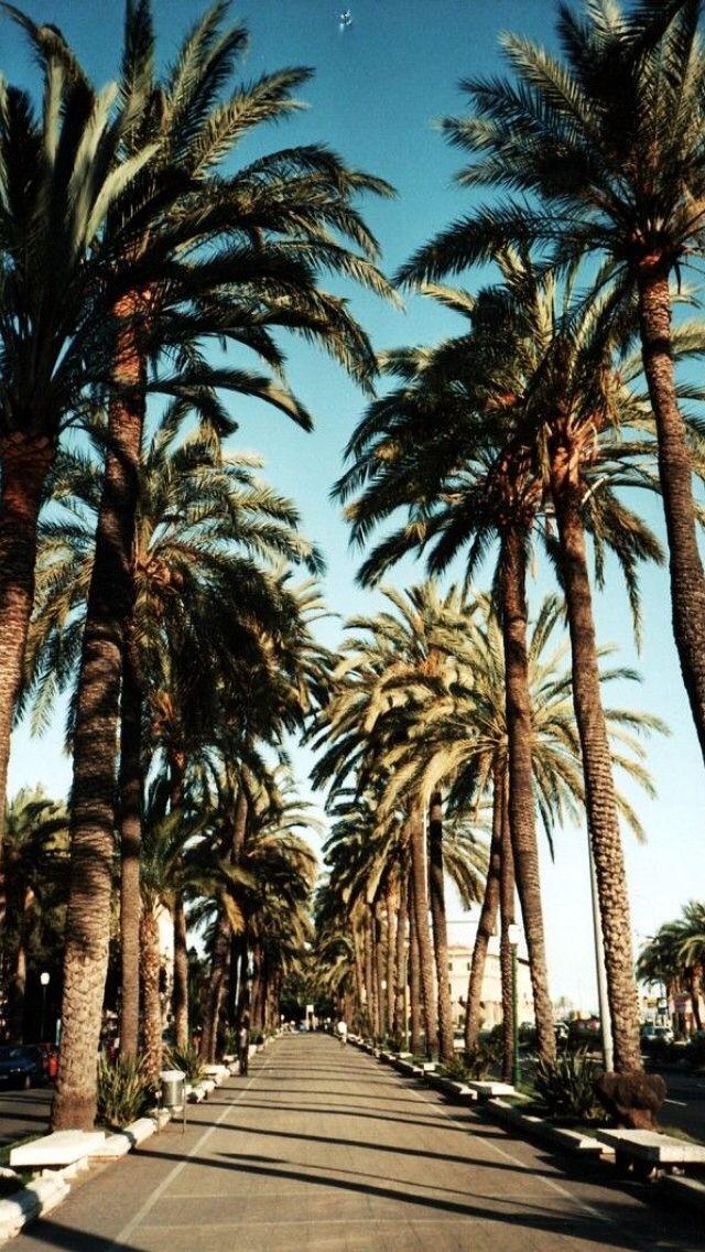 California Palm Trees Wallpaper Picserio - Palm Trees Iphone Wallpaper Hd - HD Wallpaper