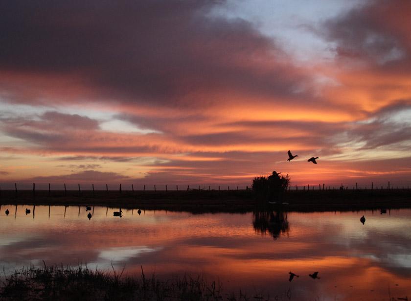 Ducks Hunting - HD Wallpaper