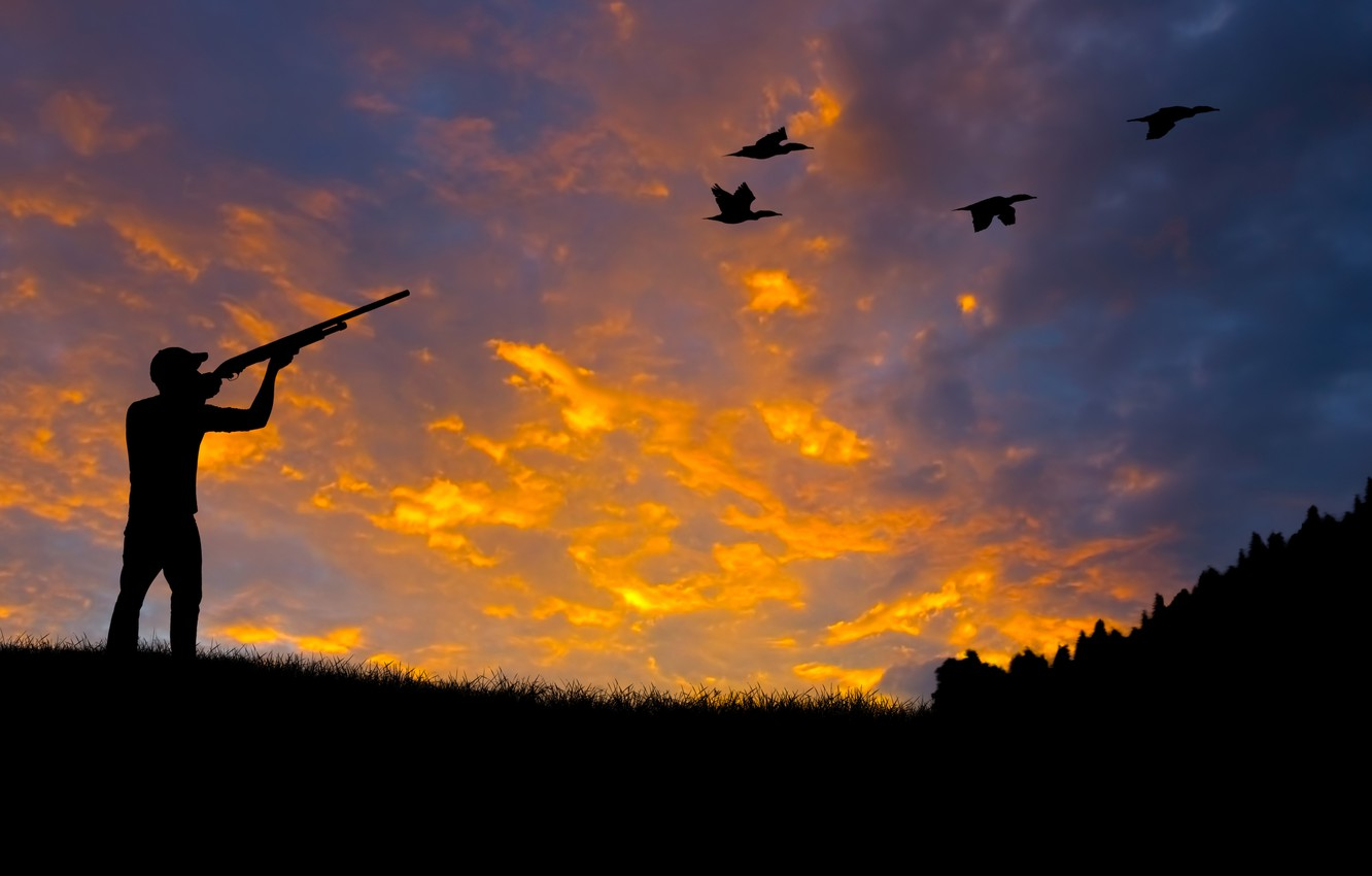 Photo Wallpaper Forest, Nature, Duck, Silhouette, Shooting, - Threat To The Ecosystem - HD Wallpaper