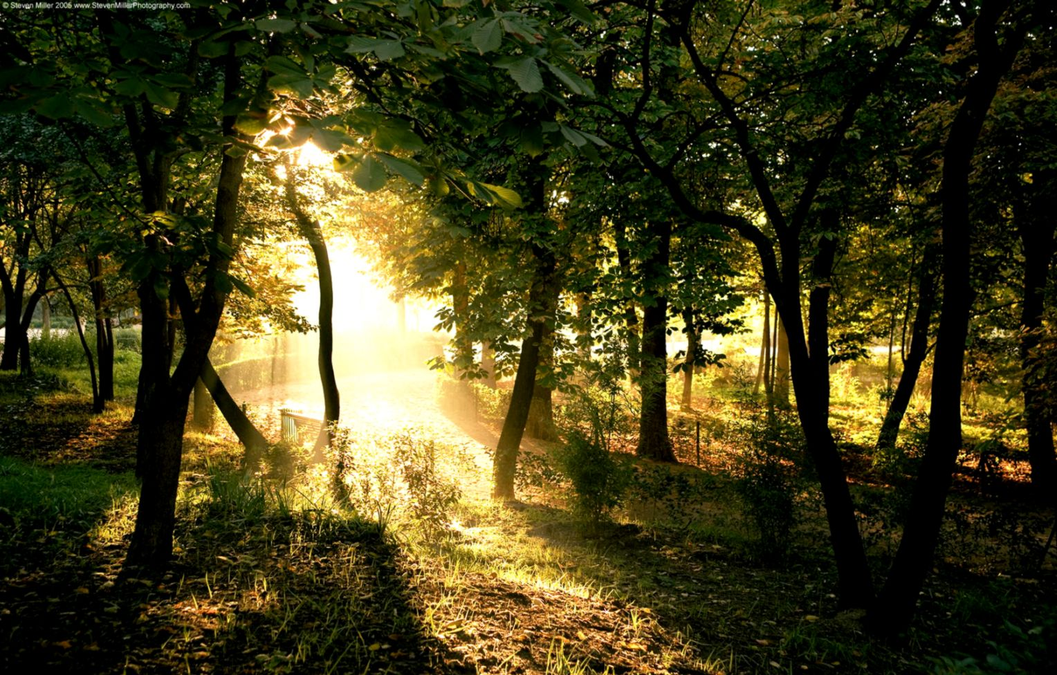 Mac Wallpapers Hd » Light In The Forest Nature Mac - Forest At Dawn Hd Phone - HD Wallpaper