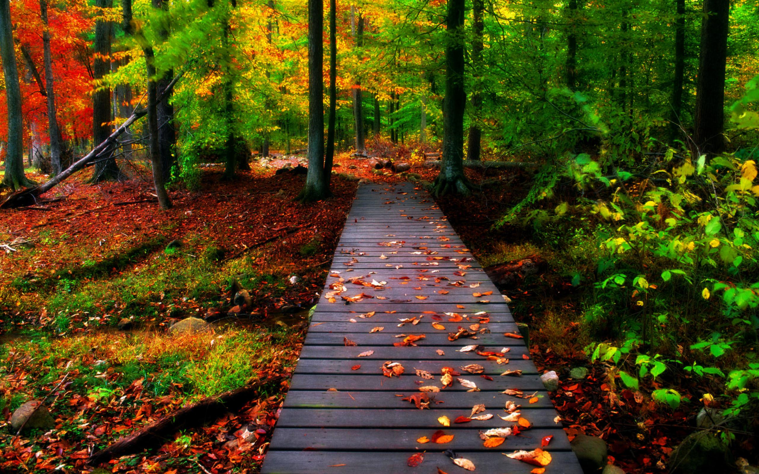Free Fall Foliage Image Background Photos Mac Wallpapers - Nature Wallpaper Background - HD Wallpaper