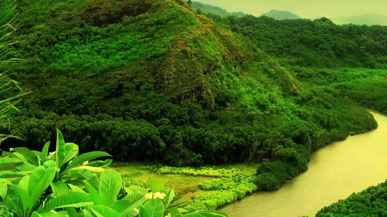 Rain Forest Wallpaper Hd - HD Wallpaper