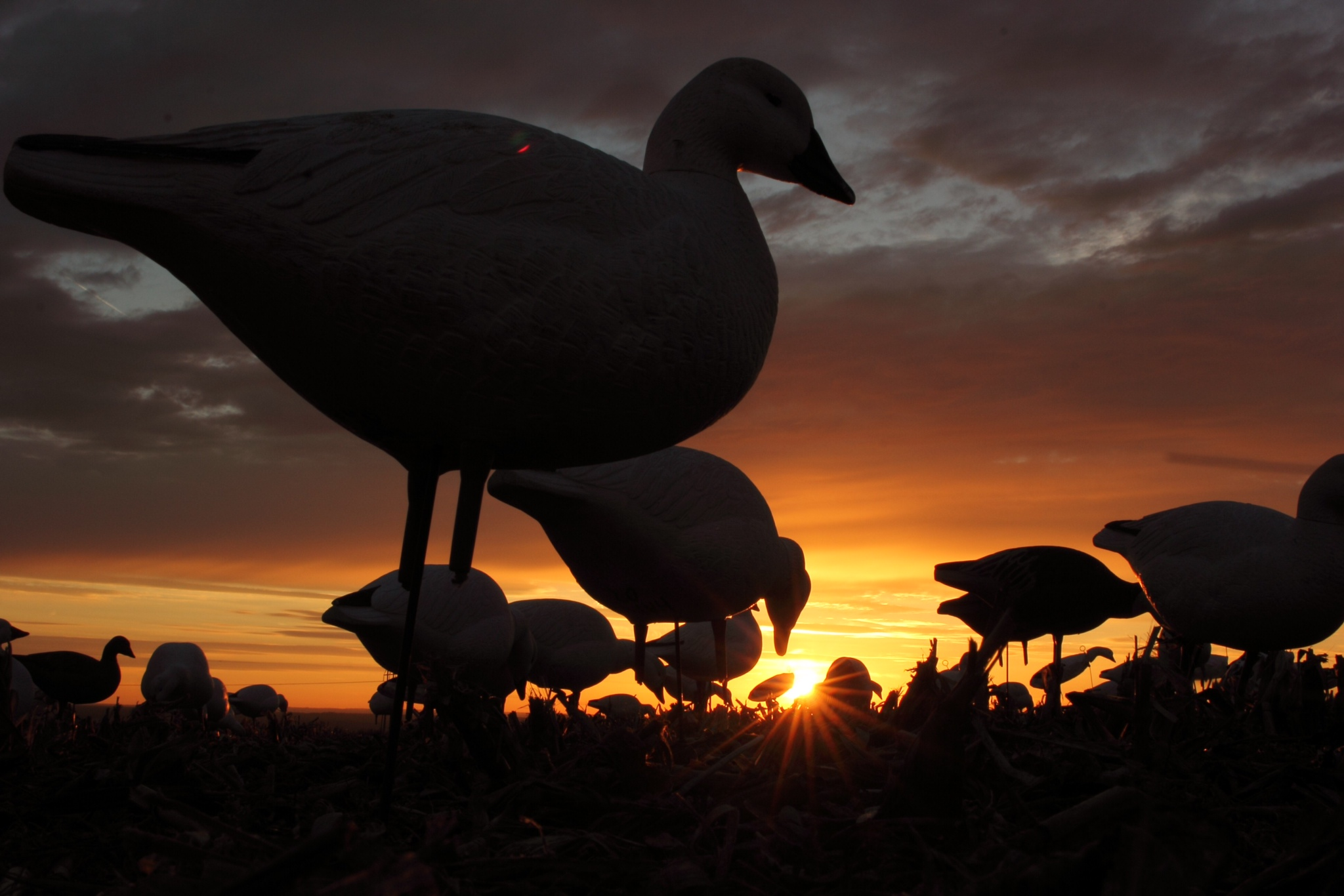 Cool Goose Hunting - HD Wallpaper