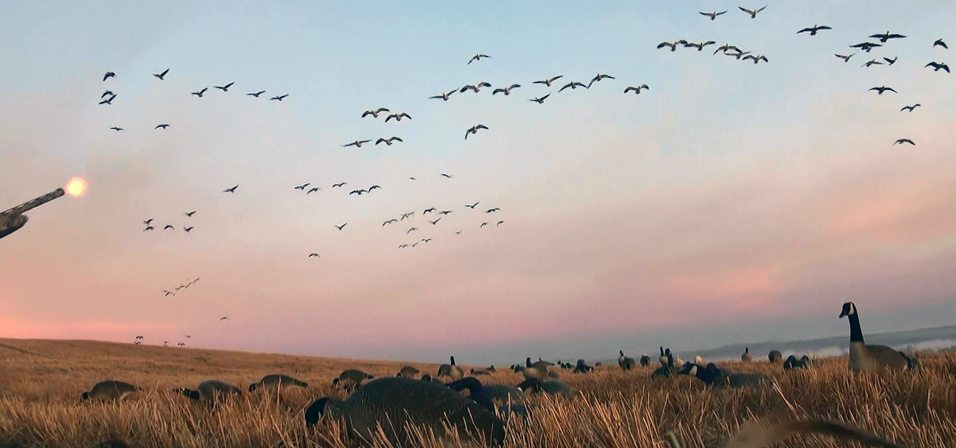 Waterfowl Hunting Saskatchewan Canada - Flock - HD Wallpaper