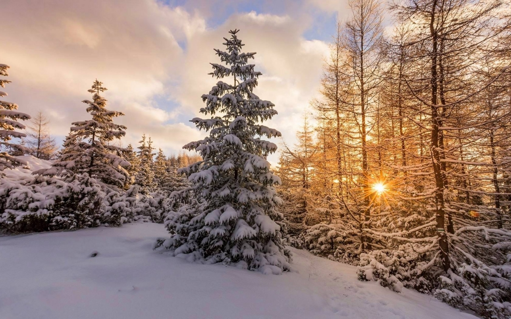 Snow, Winter, Sunset, Pine Tree - Winter Sunset Tree Snow - HD Wallpaper