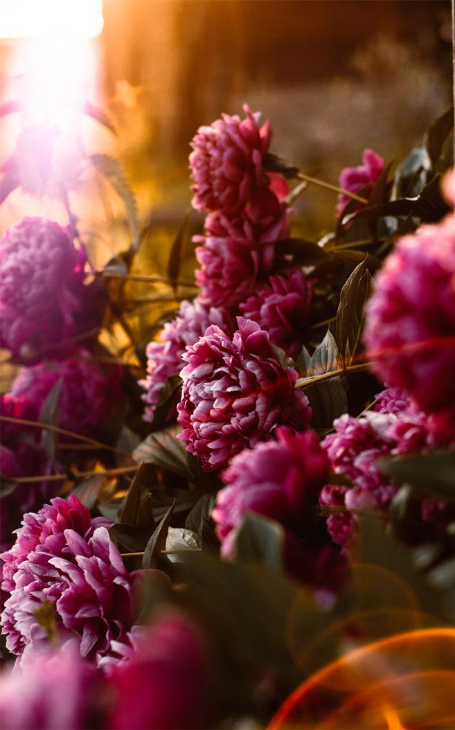 Dark Colored Iphone Wallpaper Flowers - HD Wallpaper