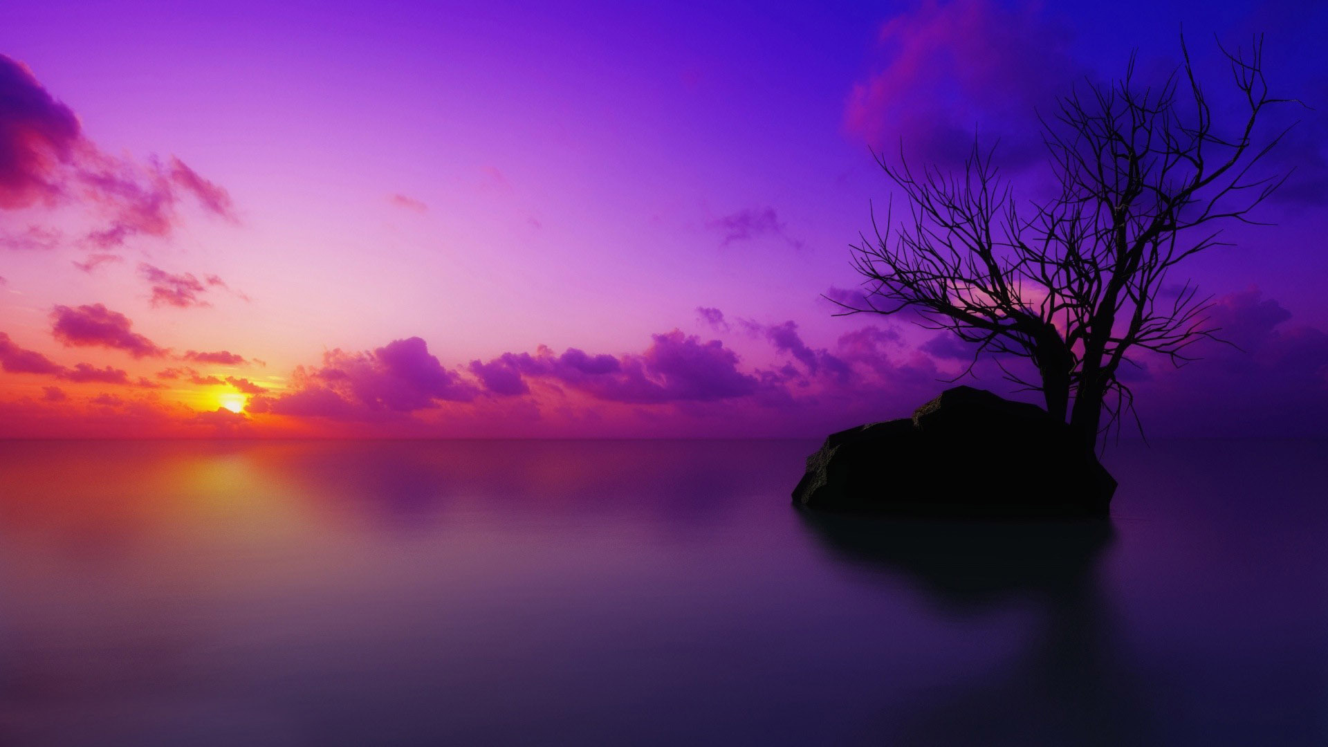 Purple Background Free Download Desktop Wallpaper Purple Purple Sunset Wallpaper Hd 1920x1080 Wallpaper Teahub Io