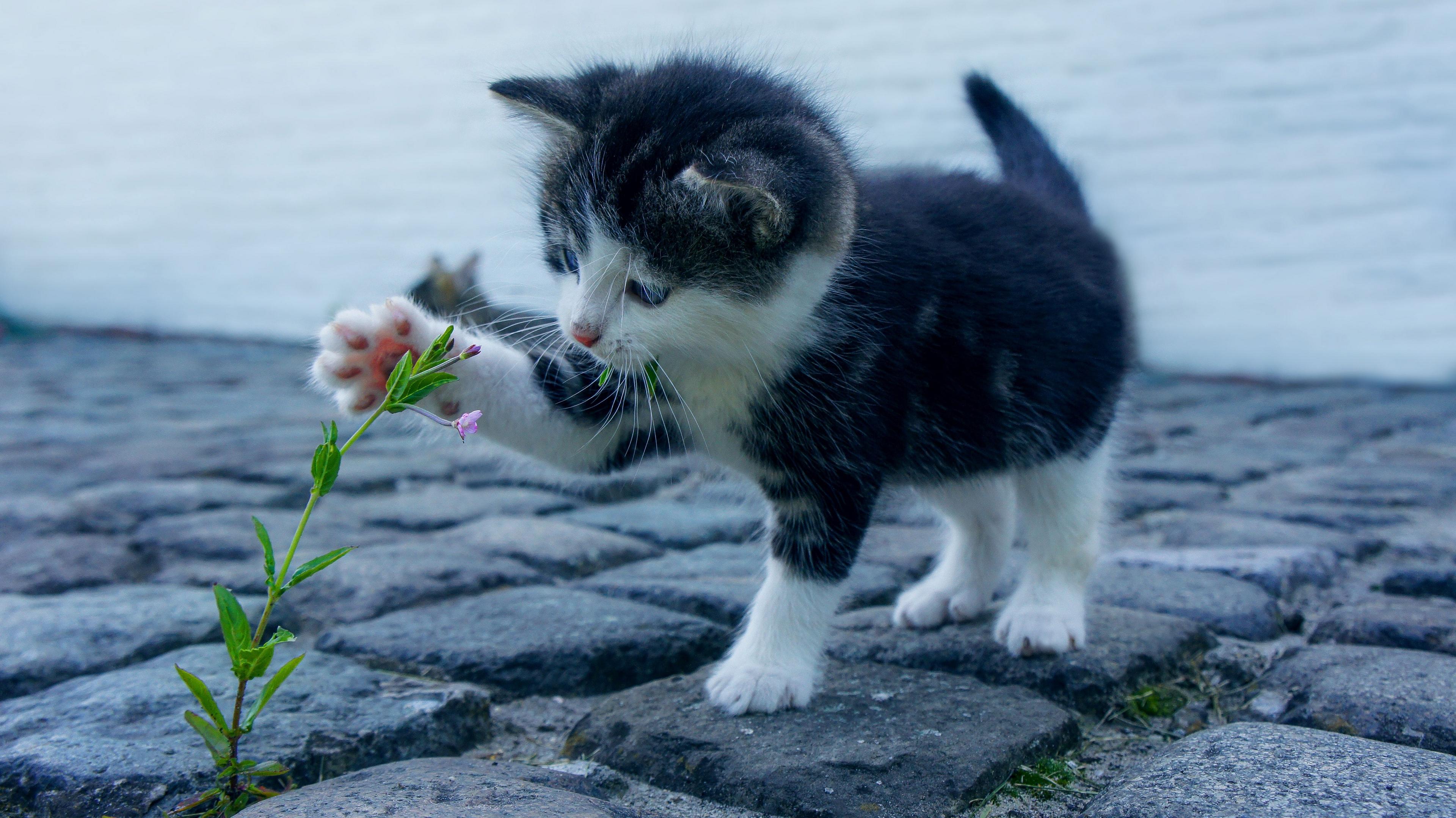 Wallpaper Kitten, Flower, Cute, Baby - 4k Baby Cat - HD Wallpaper