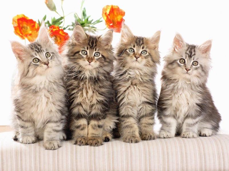 Cute-cats - Group Of 4 Cats - 800x600 Wallpaper - teahub.io