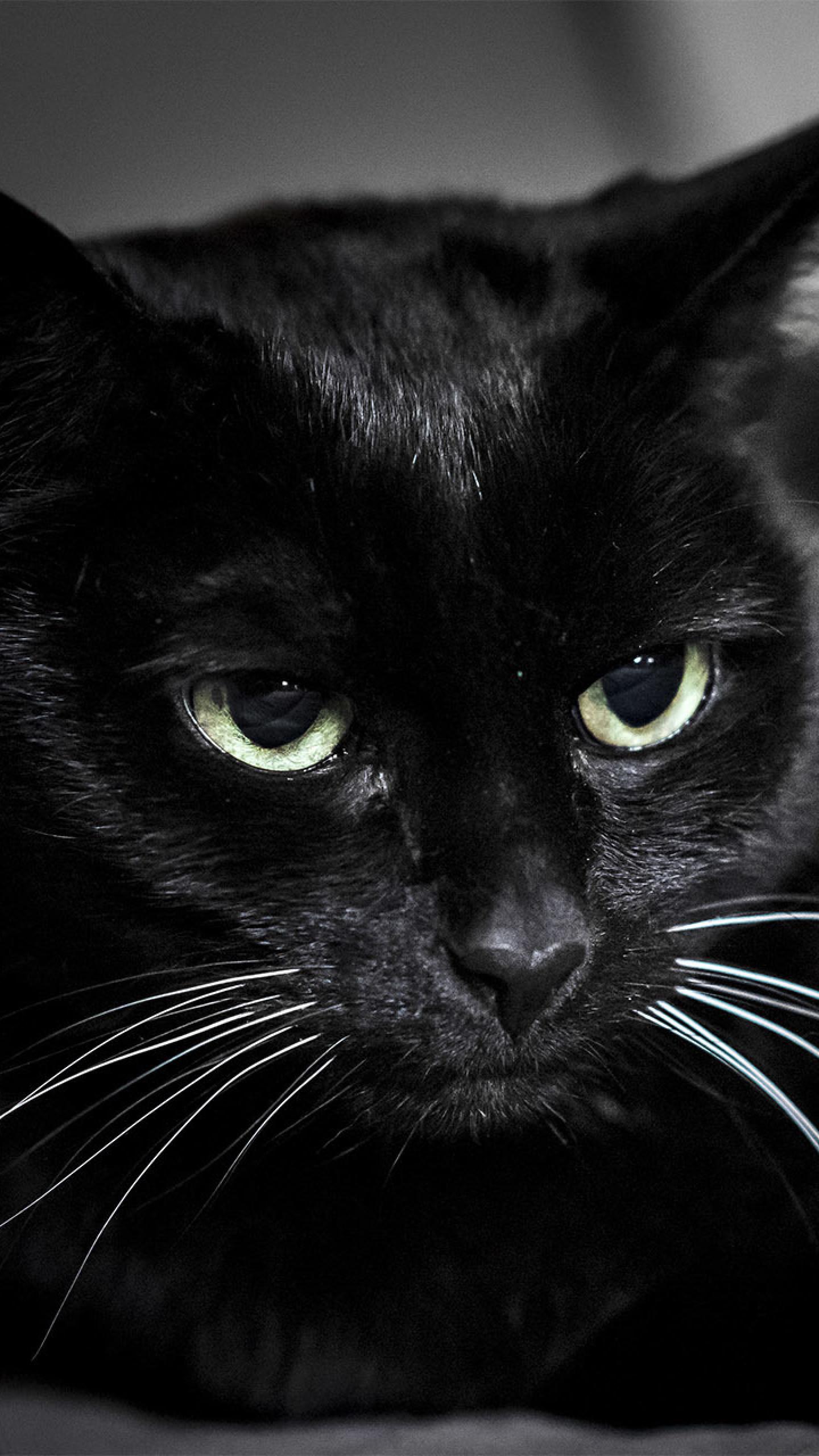 Preview Wallpaper Black Cat Muzzle Eyes Data Src Cat Wallpaper Hd Black 1440x2560 Wallpaper Teahub Io