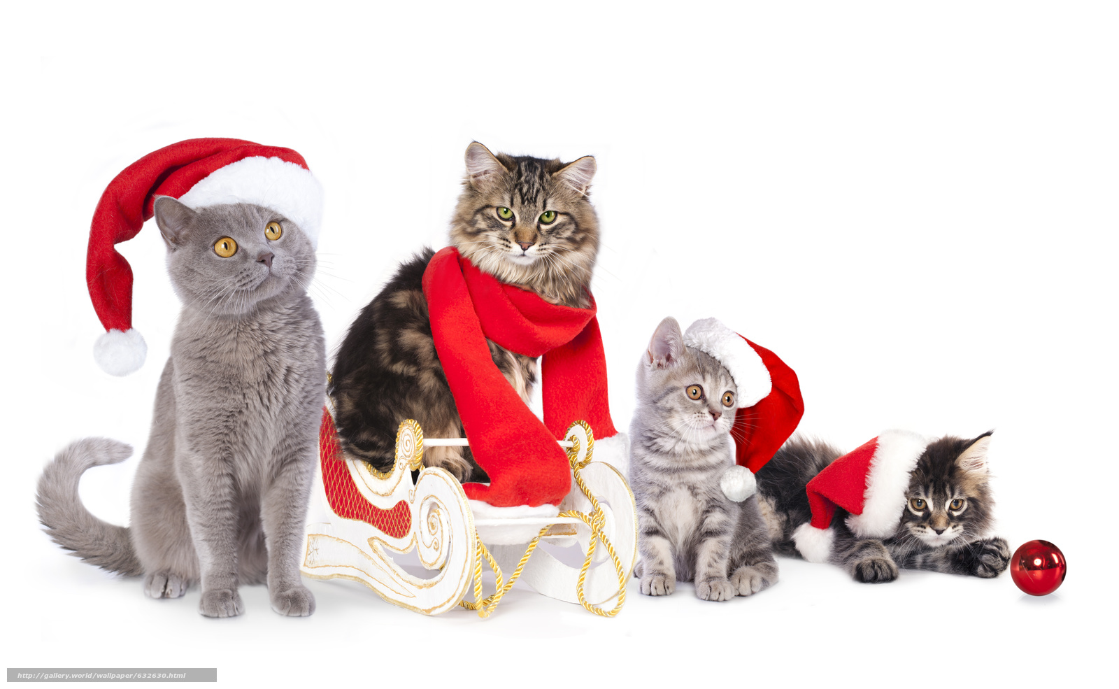 Download Wallpaper Cat Cats Kittens Sledge Free Christmas Cat Dog 1600x985 Wallpaper Teahub Io