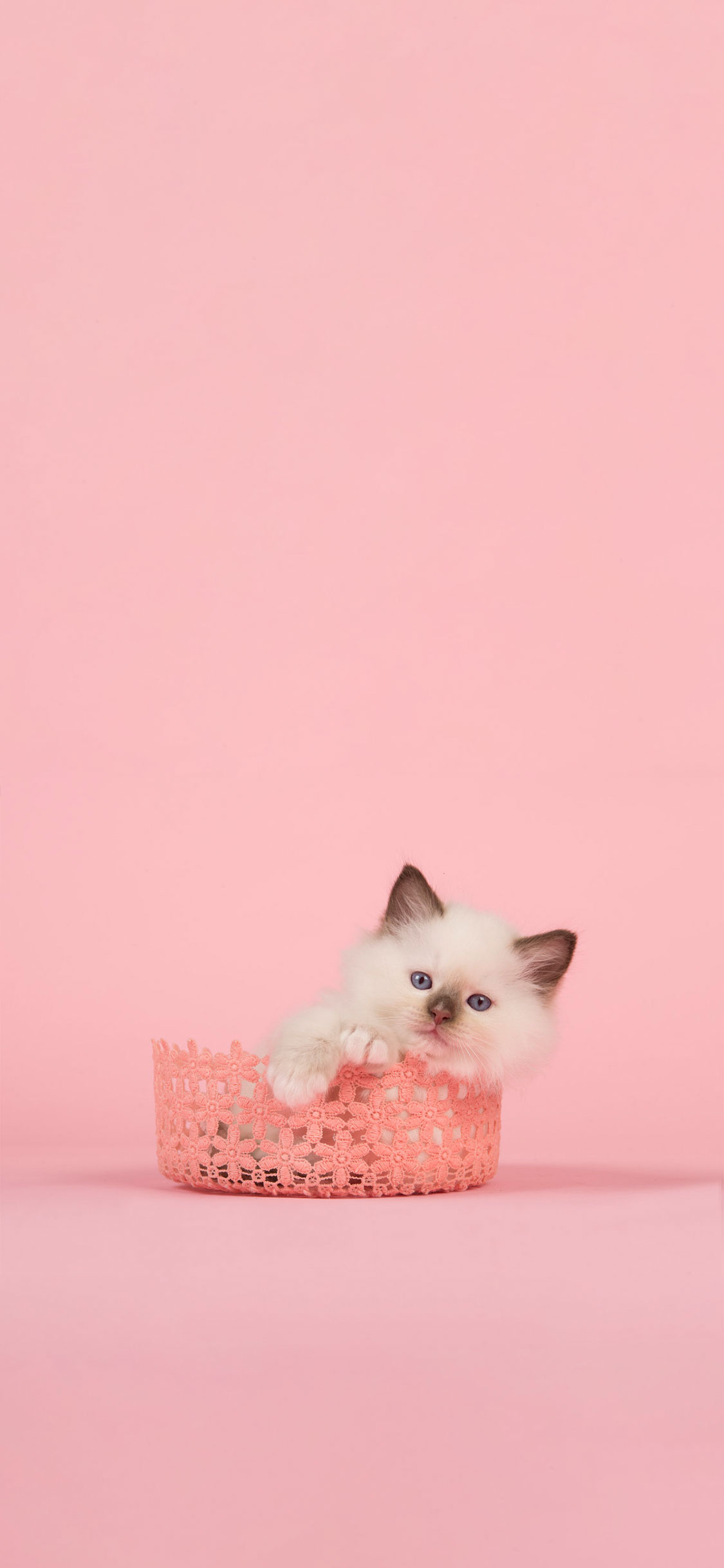Cat Pink Cat Wallpaper Iphone 1125x2436 Wallpaper Teahub Io