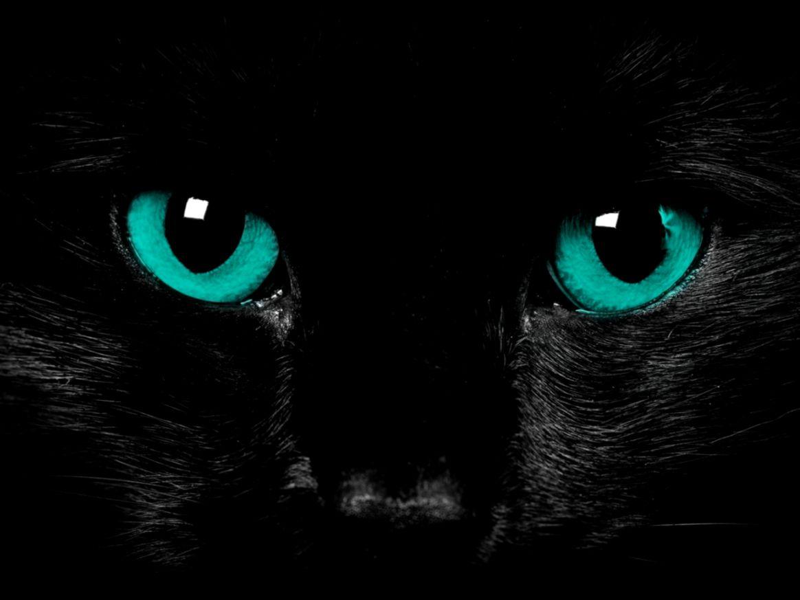 Animals Images Black Cat Blue Eyes Cat Wallpaper Hd Cute Black Cat Wallpaper Hd 1164x873 Wallpaper Teahub Io