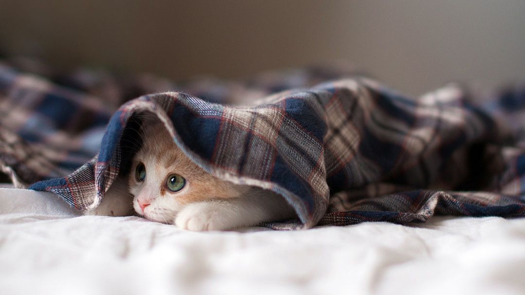 Android, Iphone, Desktop Hd Backgrounds / Wallpapers - Kitten Wallpaper For Desktop Hd - HD Wallpaper