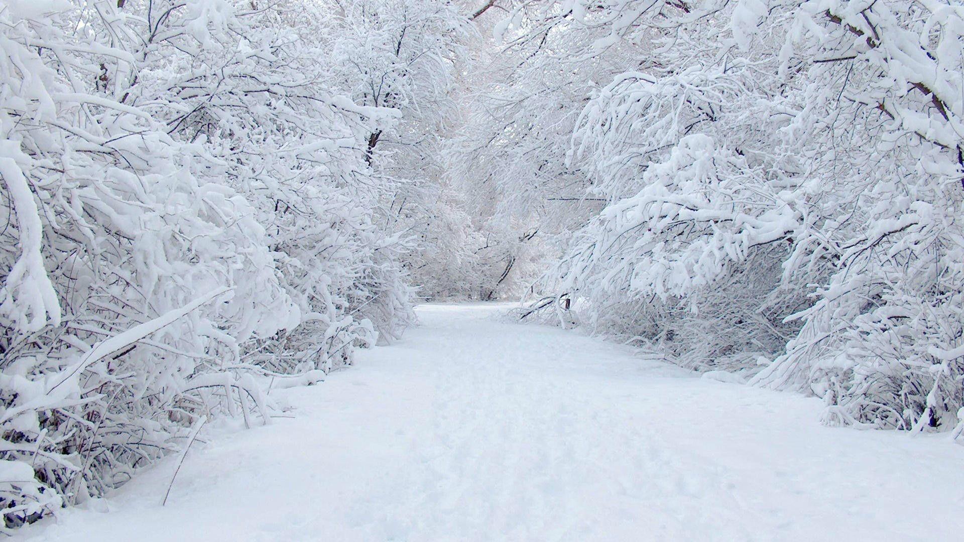 1920x1080, Free Winter Scenery Wallpaper - Winter Wonderland Background - HD Wallpaper