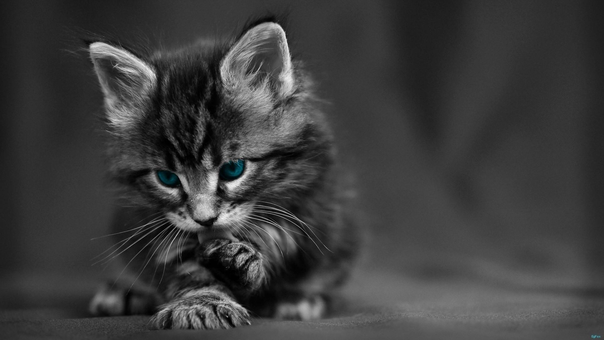 Cute Cat Black And White 1920x1080 Wallpaper Teahub Io