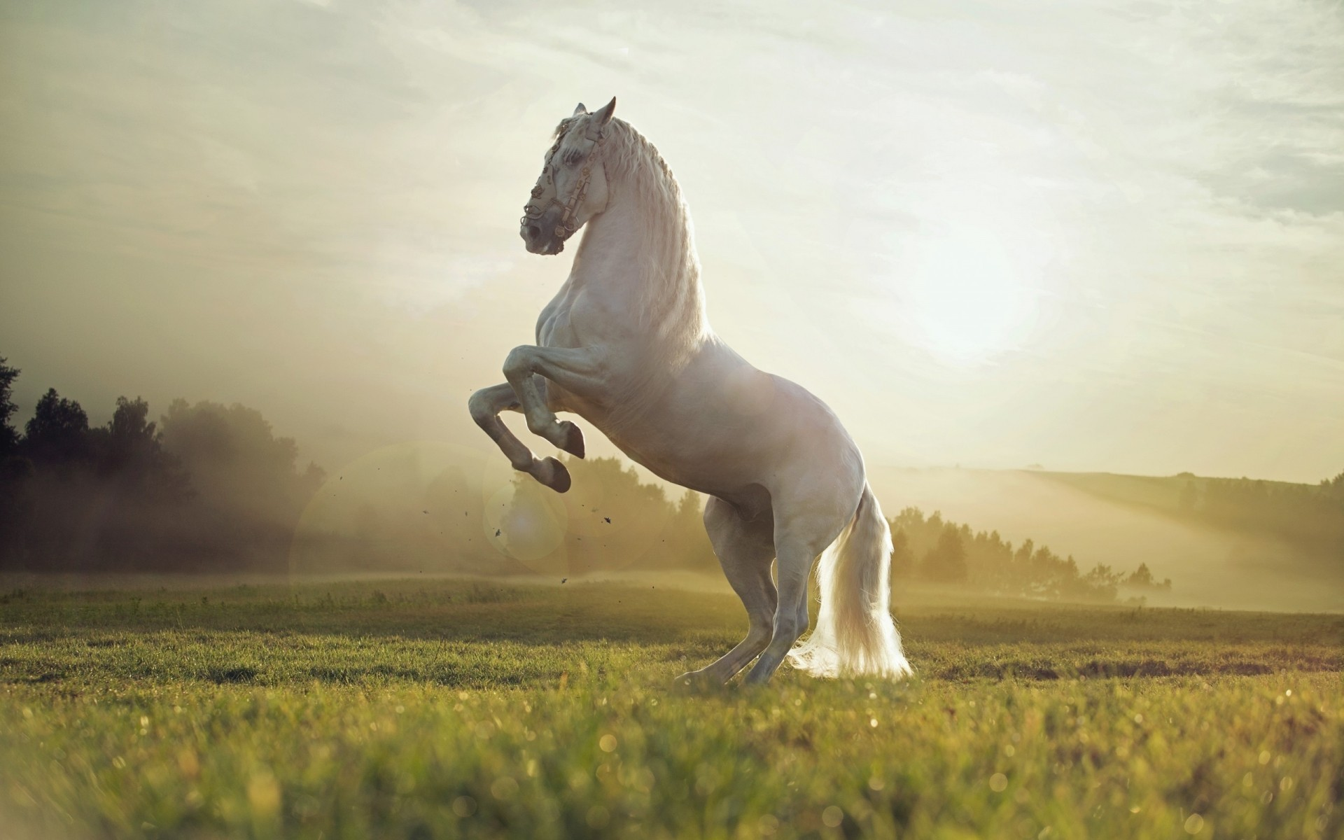 Animals Cavalry Mammal One Mare Horse Grass Field Animal - White Horse In Nature - HD Wallpaper